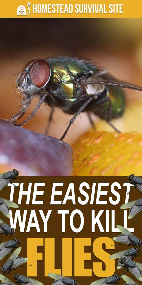 The Easiest Way To Kill Flies