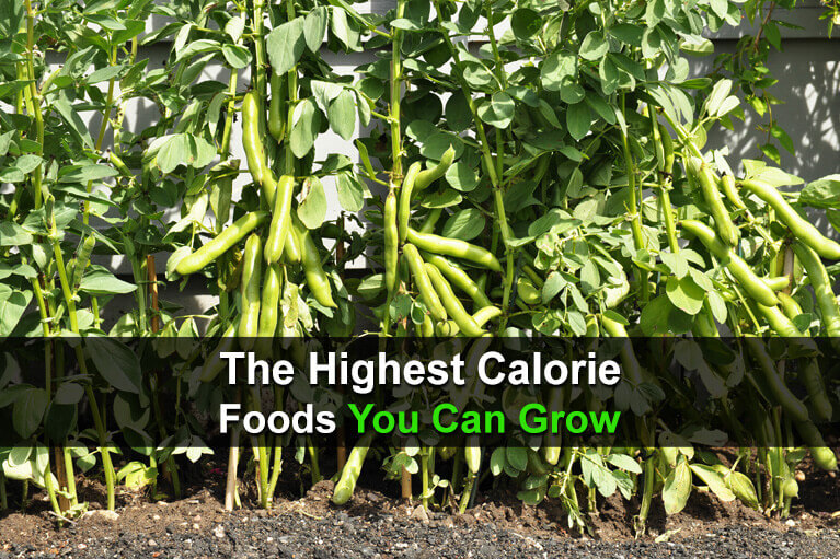 The Highest Calorie Foods You Can Grow