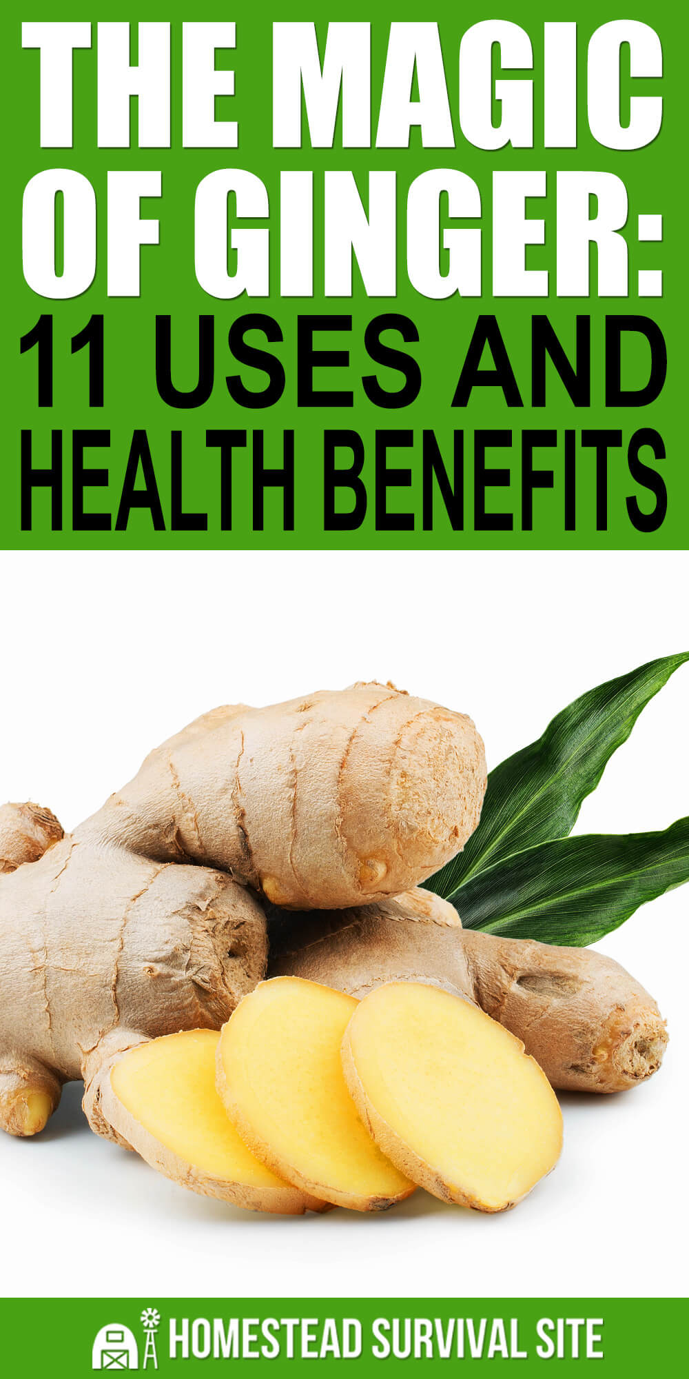 The Magic of Ginger: 11 Uses and Health Benefits