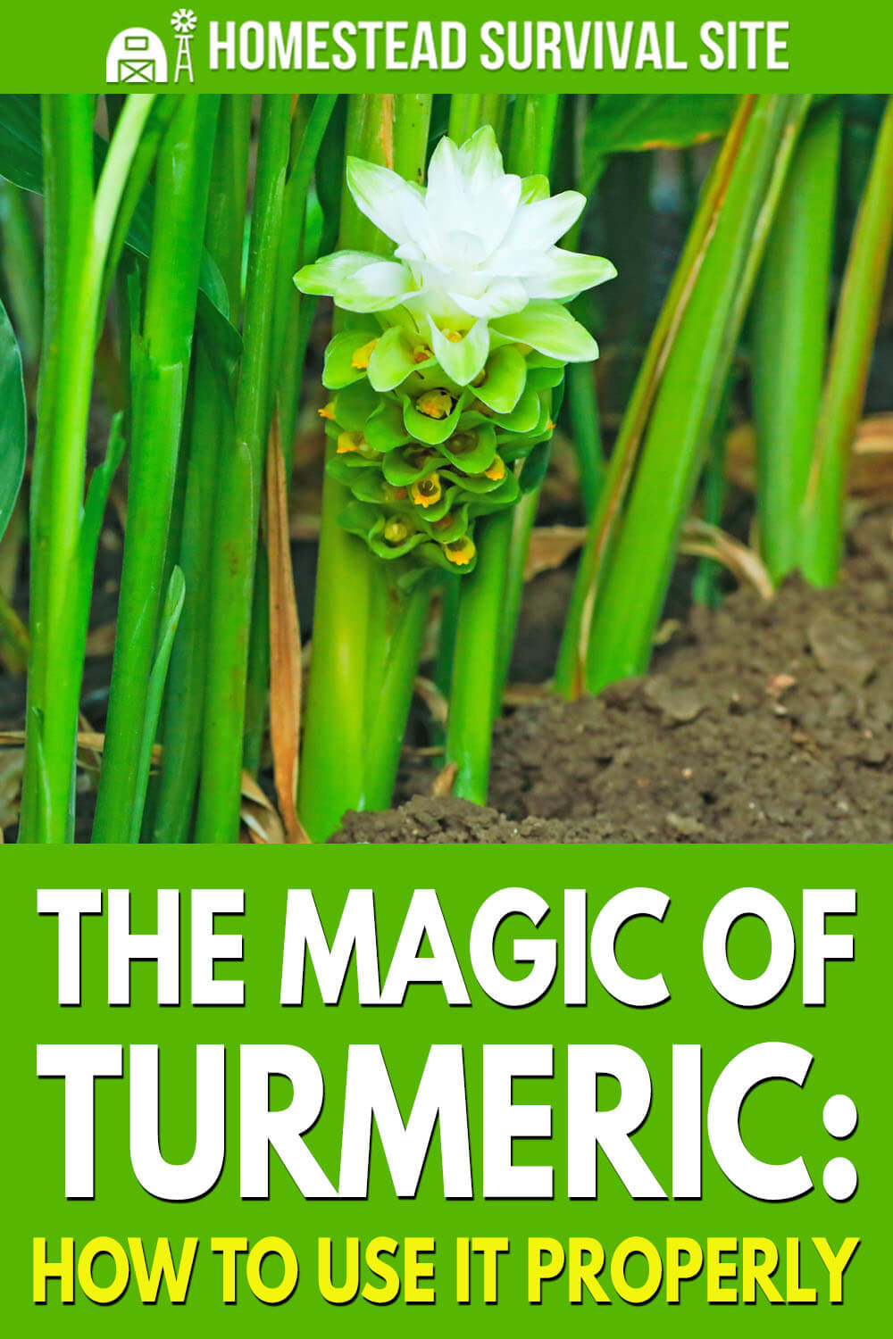 The Magic of Turmeric: How To Use It Properly