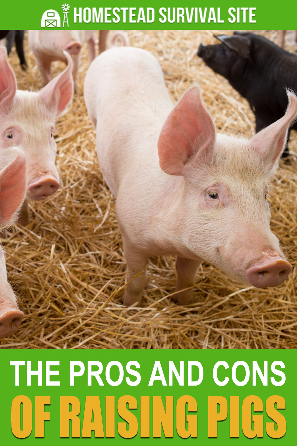The Pros and Cons of Raising Pigs