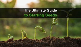 The Ultimate Guide to Starting Seeds