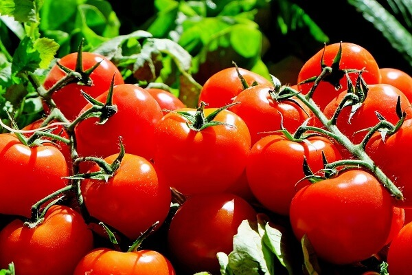 Tomatoes | Foods That Store Well in Root Cellars