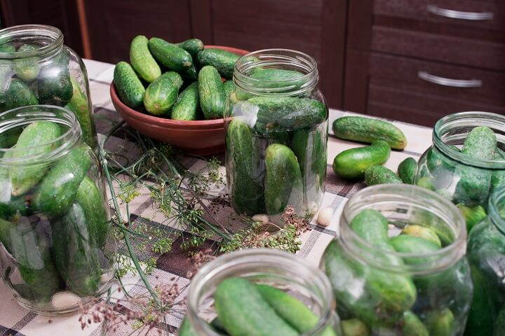 Turning Fresh Cucumbers Into Pickles