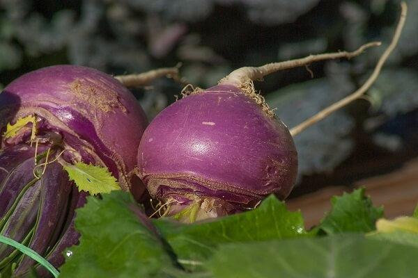 Turnips | Foods That Store Well in Root Cellars