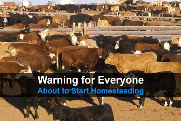 Warning for Everyone About to Start Homesteading