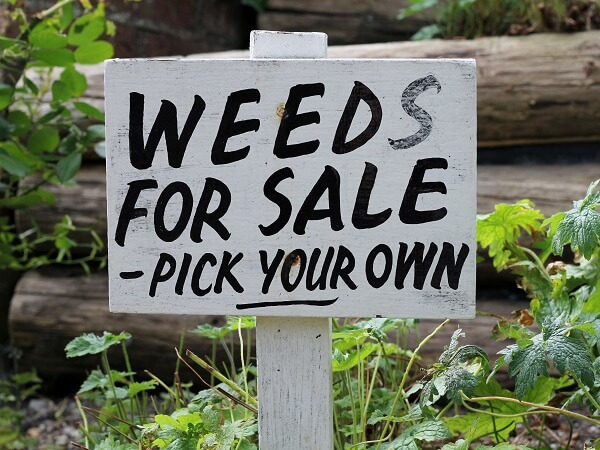 Weeds for Sale Sign