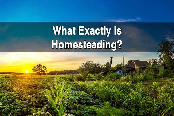 What Exactly Is Homesteading?