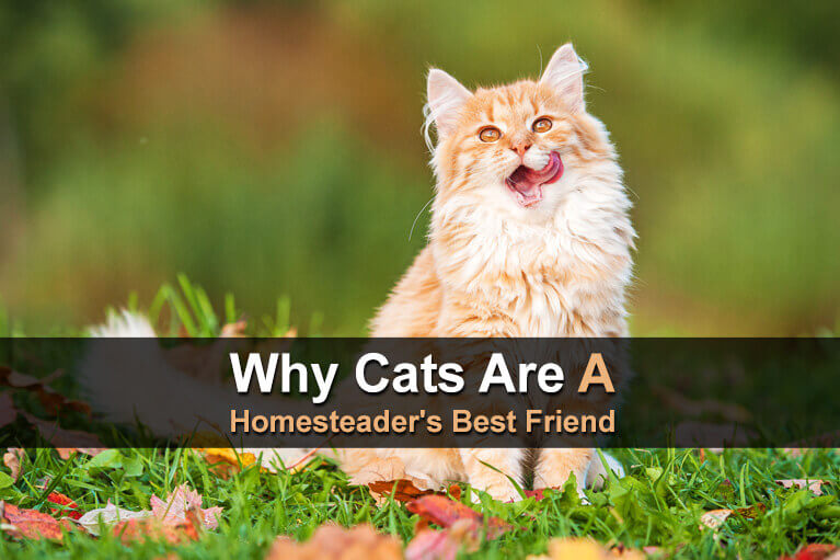 Why Cats Are A Homesteader's Best Friend
