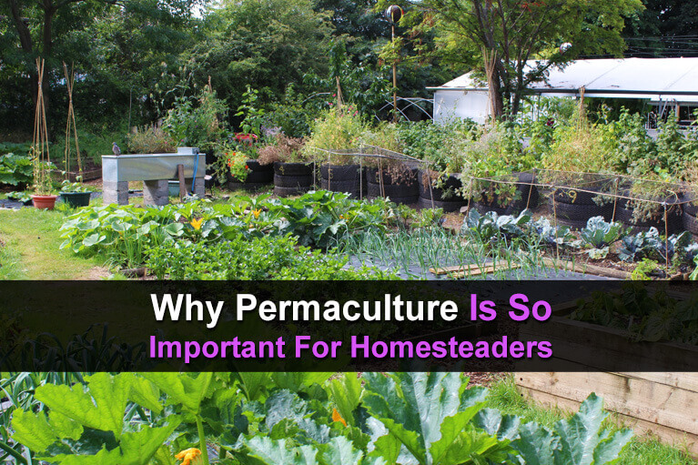 Why Permaculture Is So Important For Homesteaders