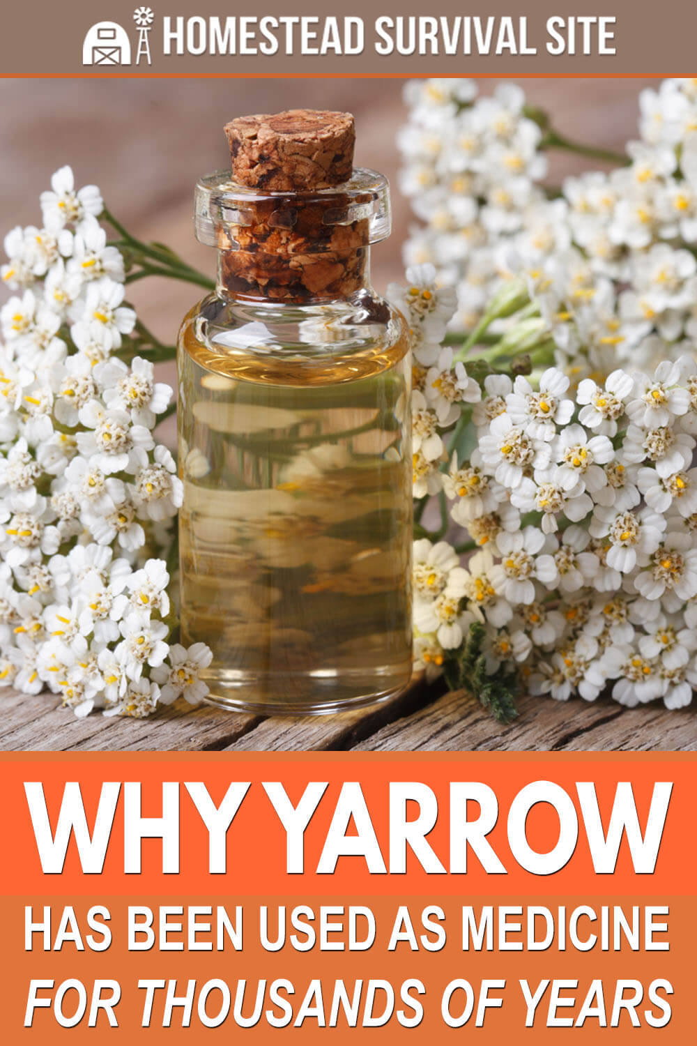 Why Yarrow Has Been Used as Medicine for Thousands of Years